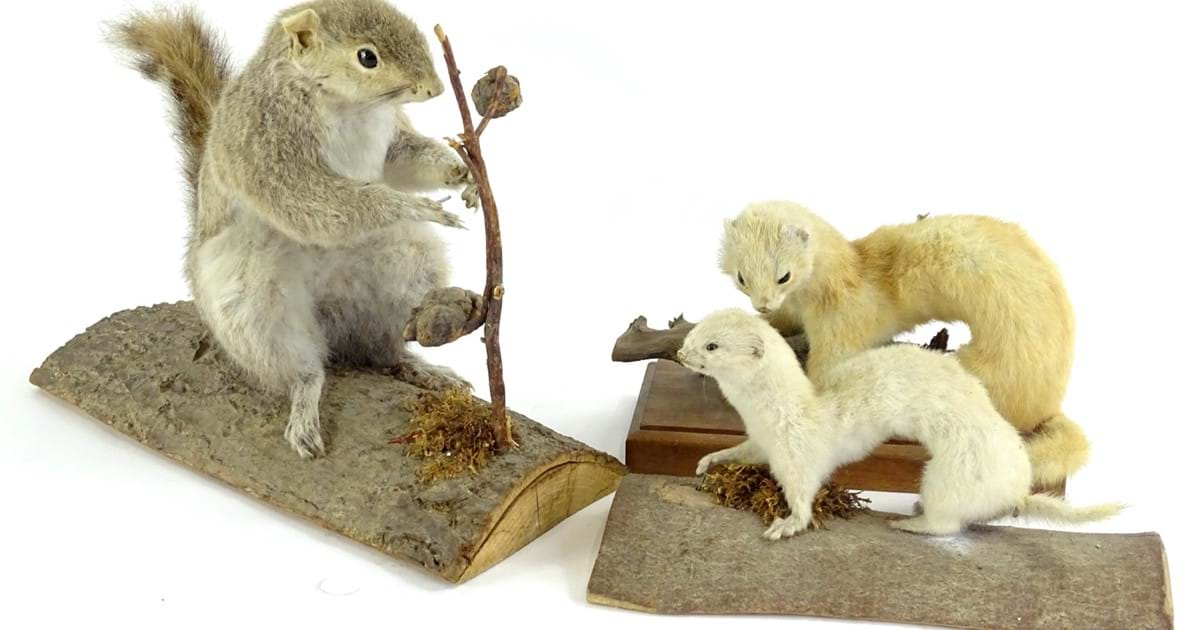Taken aback by taxidermy Image