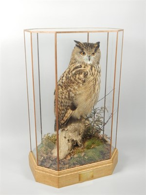 Lot 325 A taxidermied male eagle owl by Mike Gadd of Boston Spa