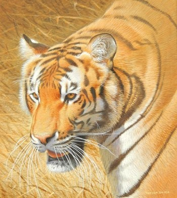 Thumbnail _lot 385 Trevor Boyer (born 1948). Bengal tiger