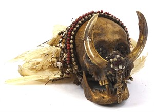 Lot 372 An Asmat tribal skull, with tusk front, feathered top